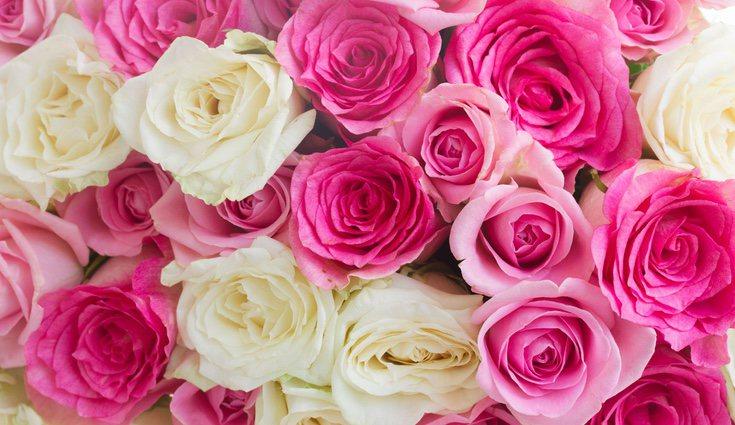 Se calcula que hay alrededor de más de 30.000 tipos de rosas, algo que se disparó tras la aparición de la rosa del híbrido del té