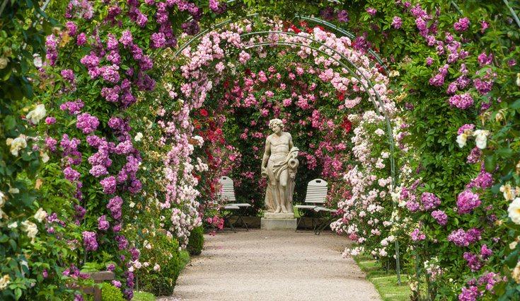 Las rosas silvestres son los tipos más antiguos y más difíciles encontrar de los tipos que se pueden encontrar
