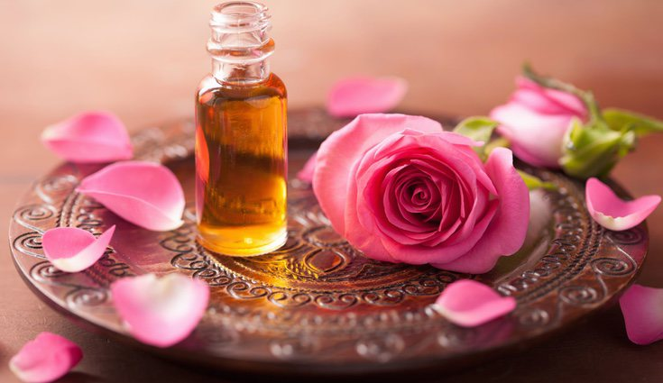 Los rosales antiguos son todos aquellos ejemplares que ya estaban presentes antes de la comercialización de la flor del híbrido del té en 1867