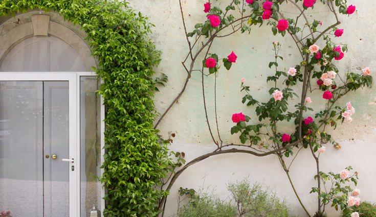 La plantas tapizantes son todo un reto par los amantes de la jardinería