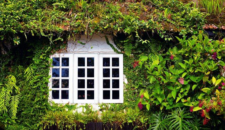 La plantas tapizantes son una opción perfecta para decorar la casa
