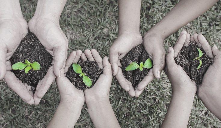 Ten en cuenta el periodo de cosecha para saber en qué mes plantar tus alimentos