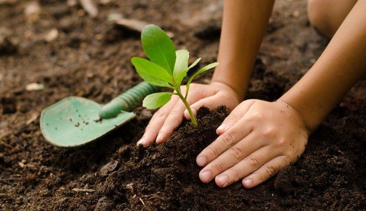Puedes sembrar alimentos en macetas en tu terraza