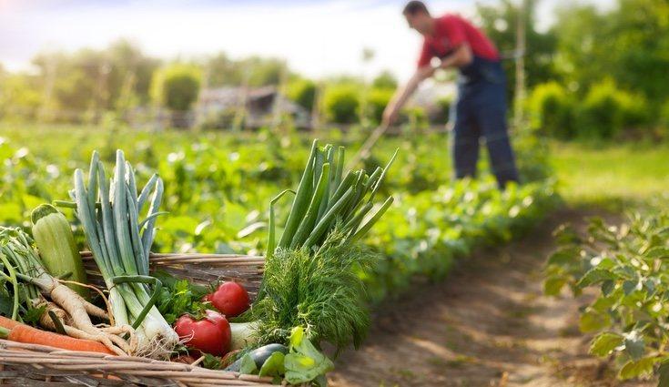 Puedes sembrar tus alimentos en el huerto urbano más cerca de tu casa