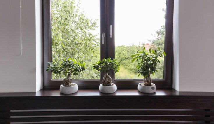 Coloca tu planta cerca de una ventana o balcón
