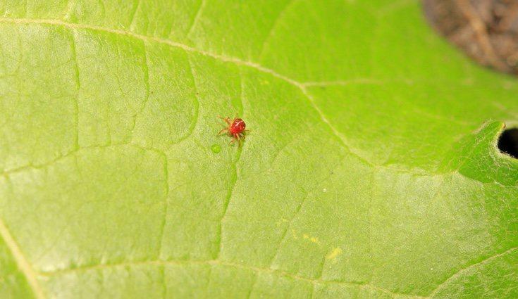 Evita los parásitos para que tus plantas crezcan sanas