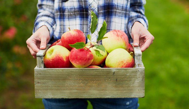 Las frutas comercializadas en supermercados suelen contener pesticidas, fertilizantes y conservantes, perjudiciales para la salud
