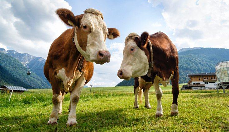 Los productos ecológicos cárnicos son aquellos que respetan el tiempo de crecimiento del animal y le deja vivir en libertad