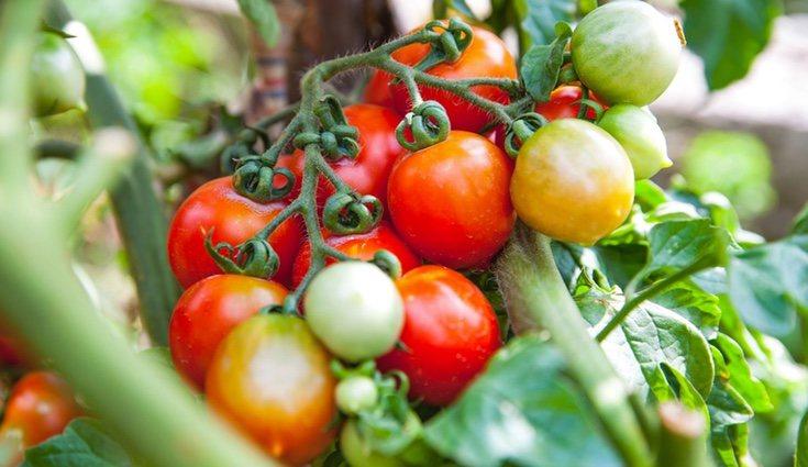 Los productos de origen ecológico conservan todos los nutrientes propios del producto en sí