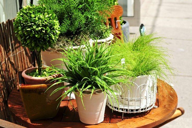 Traslada la naturaleza a tu casa con bonitas plantas