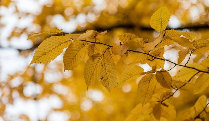 Sus hojas tienen los bordes en sierra