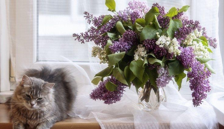 Esta planta genera un ambiente muy acogedor, por lo que son idóneas para usarlas en decoración
