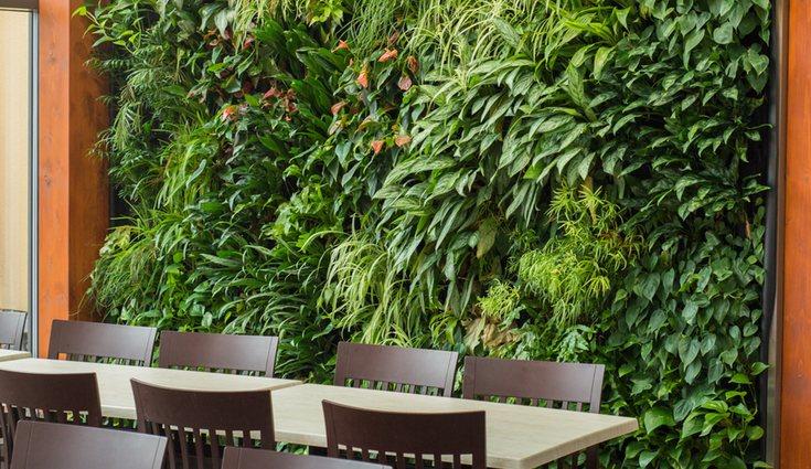 Las muros verdes son muy buenos para el aislamiento