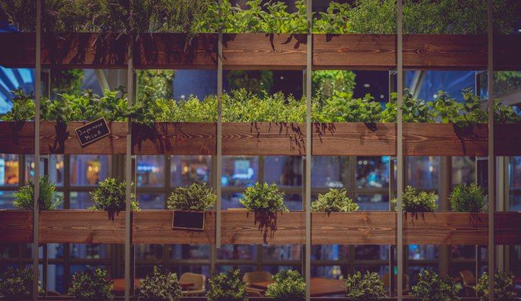 Los jardines verticales son una forma distinta de decorar con plantas