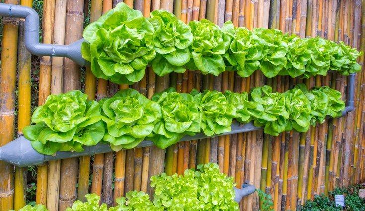 jardin vertical casero como hacer un jard n paso a siembra en casa Podremos tener nuestro propio huerto vertical en casa