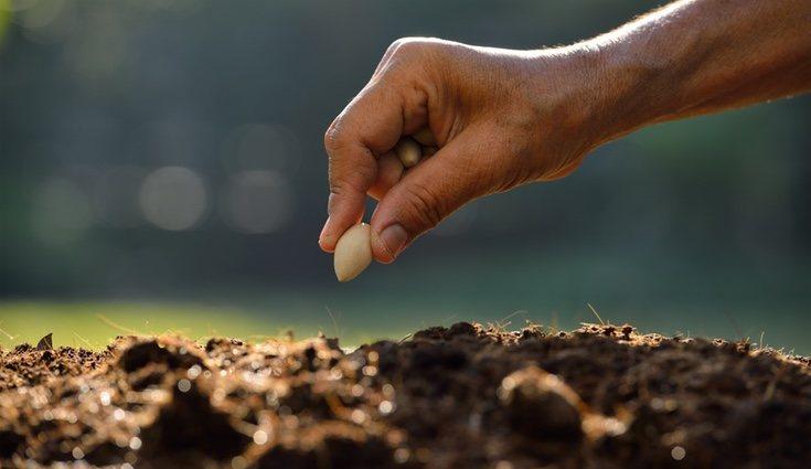 Lo primero es saber que semilla elegir para cultivar