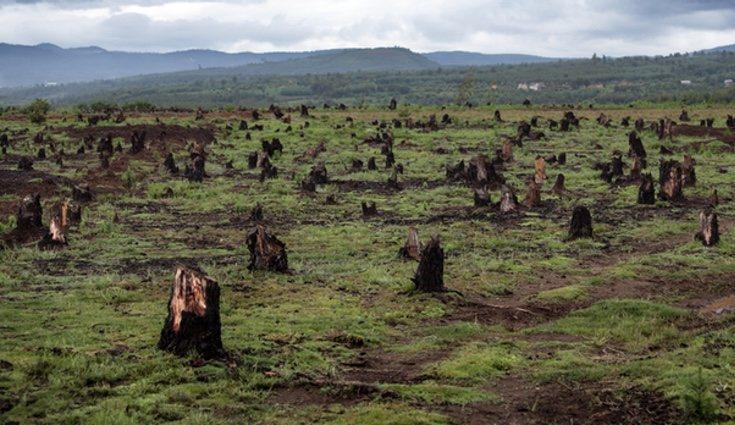 La deforestación genera impactos sociales de forma directa