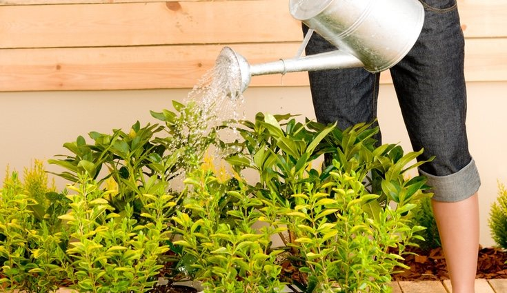 Aprovecha tu ingenio para regar tus plantas cuando estés fuera