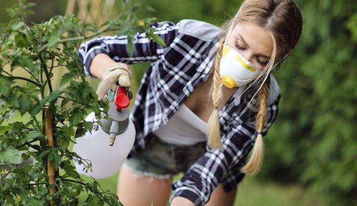 Los insecticidas siempre son buen remedio para las plagas, pero no abuses