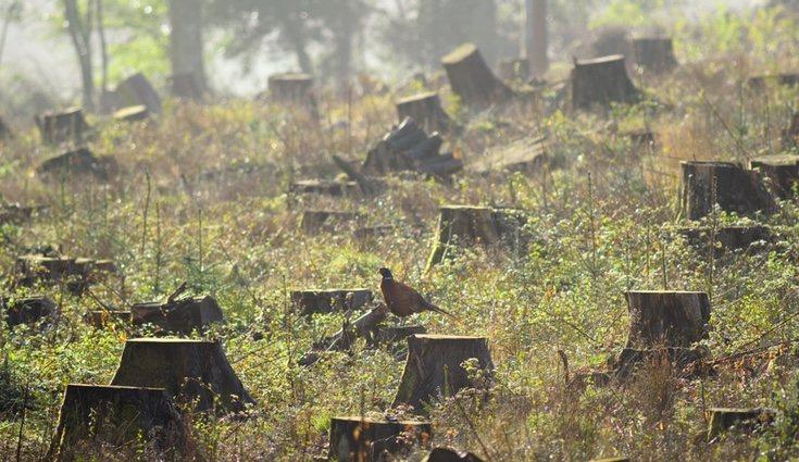 La deforestación es uno de los principales males que amenaza el planeta