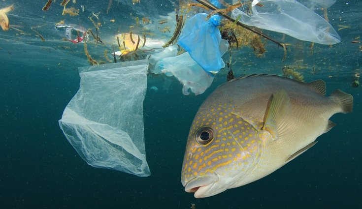 Cientos de especies marinas sufren a diario las consecuencias de la contaminación del agua