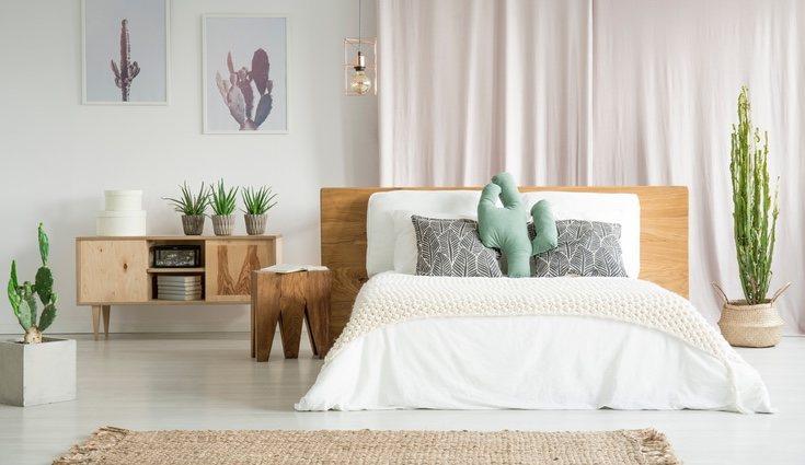Los cactus además de ser originales le dan un toque de color a cualquier estancia