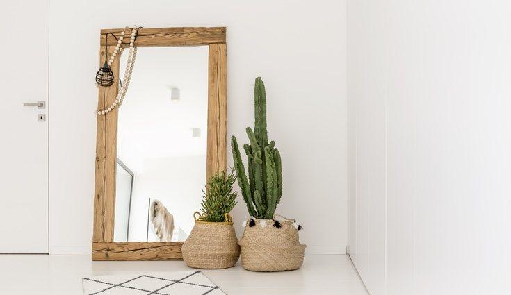 Un macetero con ruedas es la opción perfecta para transportar un cactus de gran tamaño