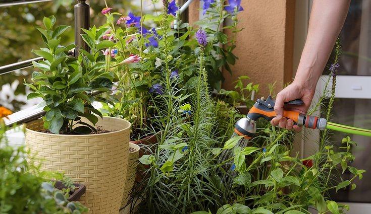 Ten cuidado con el agua, ya que un exceso de ella es perjudicial para esta planta