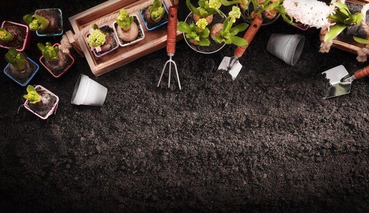 Asegúrate de contar con todos los materiales y herramientas necesarias antes de comenzar la siembra