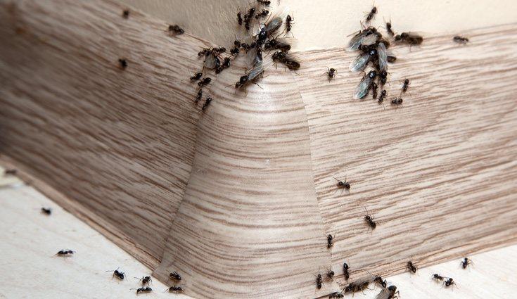 Normalmente los hormigueros están en los sitios que menos te lo esperas