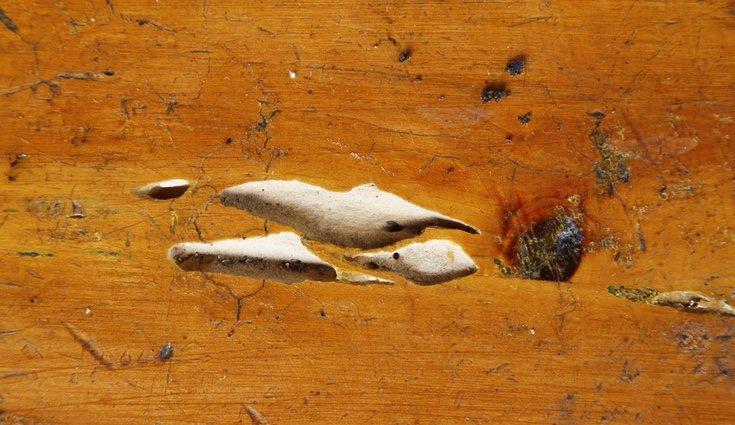 Los expertos son capaces de reconocer el sonido de las larvas en los muebles