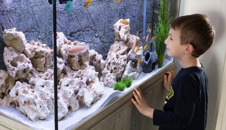 Los acuarios pueden decorar cualquier habitación del hogar