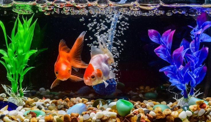 El tamaño del acuario dependerá del pez o peces que escojamos