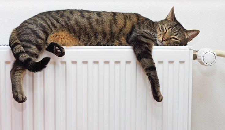 Los radiadores nunca se deben cubrir y es conveniente apagar la calefacción durante la noche
