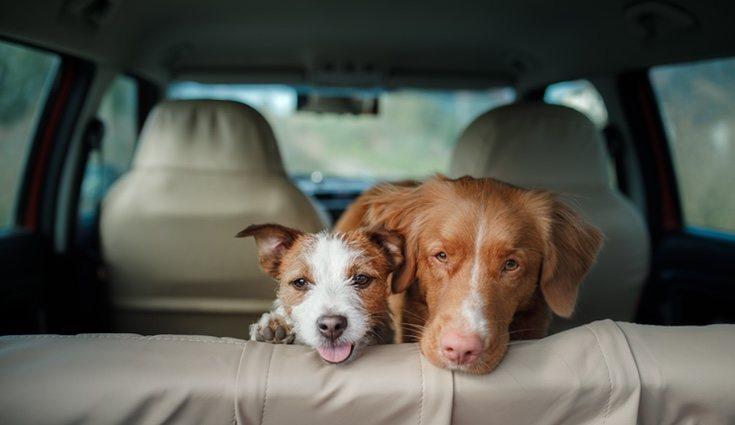 Tener mascotas y niños en tu coche puede causar que se ensucie más rápido