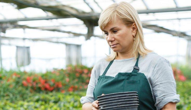 Los cambios bruscos de temperatura pueden afectar a la planta por lo que habrá que protegerla