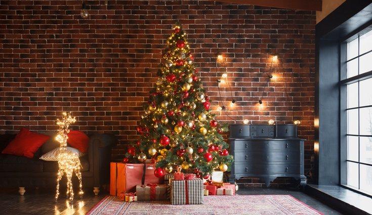 Es el árbol más usado en Navidad