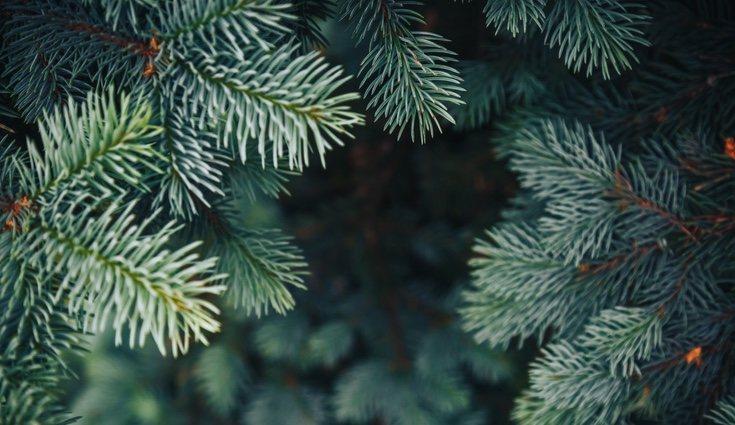 Es un árbol muy resistente
