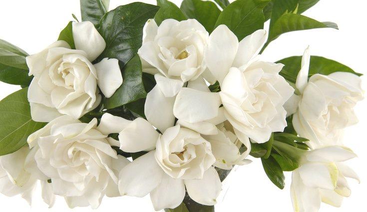 La gardenia es ideal para expresar ese sentimiento