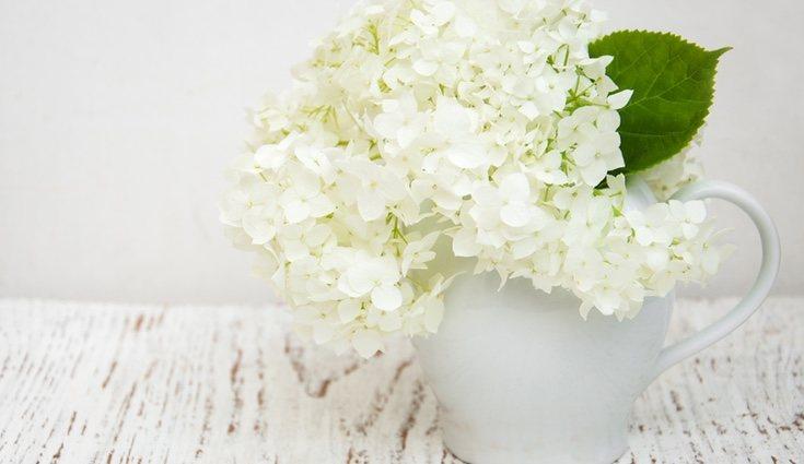 La hortensia representa la alegría y la gratitud