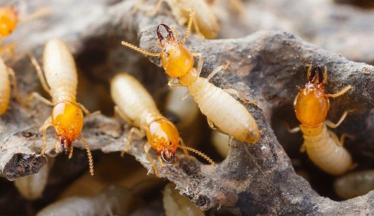 Debes tener mucho cuidado de que estas plagas no afecten a tu hogar