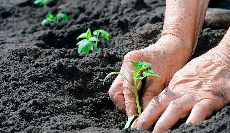 Elige la forma de acumular la tierra que mejor se adapta a tu espacio