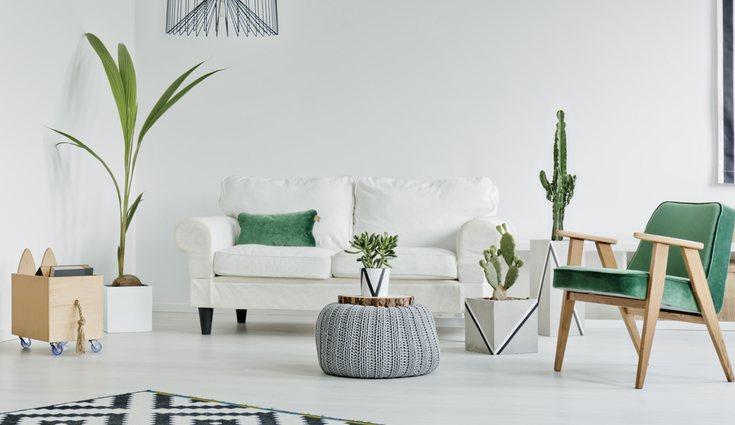 Las plantas le dan un toque especial a cualquier estancia del hogar