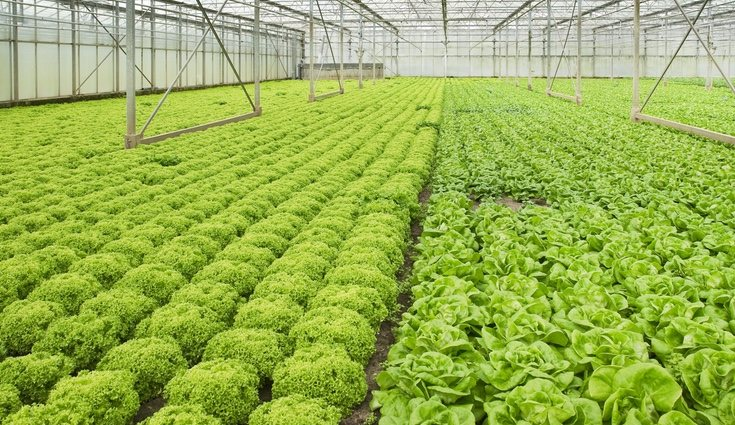 Será necesario consultar las ventajas de la tierra con la que vayas a cultivarla