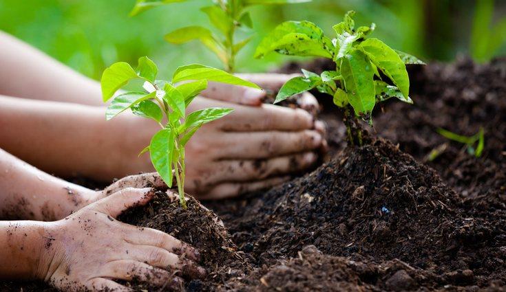 El compost orgánico favorece el crecimiento y desarrollo de las plantas
