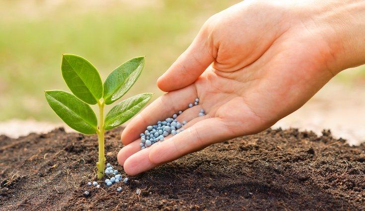 No todas las plantas necesitan la misma cantidad de fertilizante