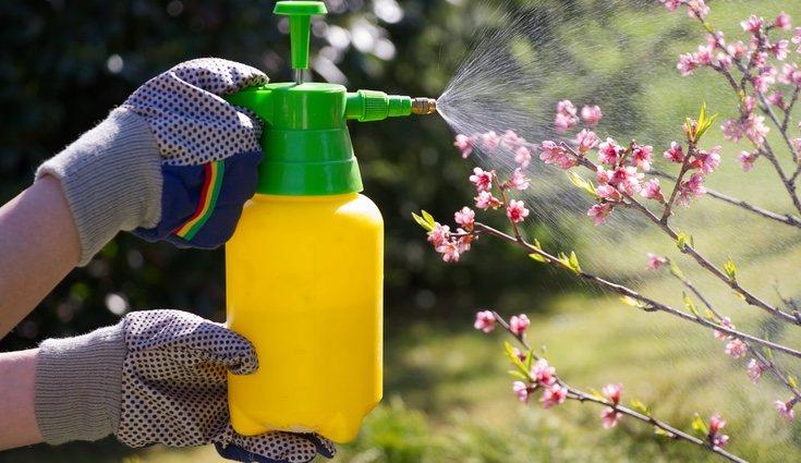 El fertilizante es un producto químico por lo que deberás usar guantes al aplicarlo