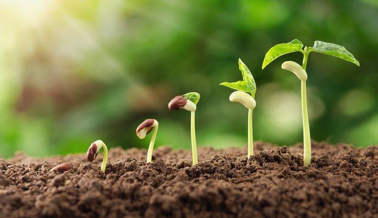 Las plantas son seres vivos y requieren cuidados constantes