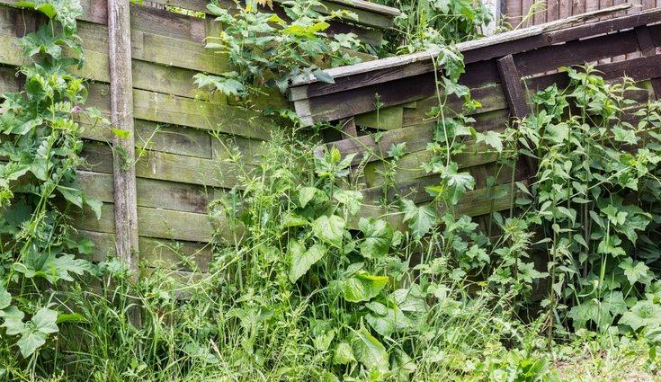 Quita el fieltro e tu jardín