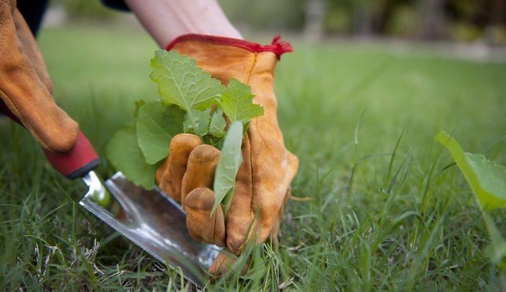 Puedes arrancar las malas hierbas con una azada de jardín o una pala.